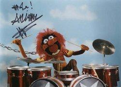 Muppet_animal
